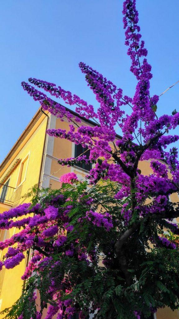 isola-d-elba-procchio-fiori-colori-bouganville
